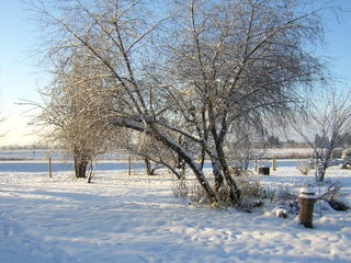 52- Garden in the winter - Amy Grisak