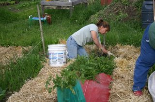 Amy working in comm. garden