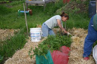 Amy working in comm. garden