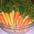 14- Bowl of freshly scrubbed carrots - Amy Grisak