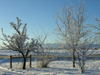 Frost_1
